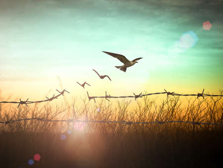 International day for the remembrance of the slave trade and its abolition concept: Silhouette of bird flying and barbed wire at autumn sunset background