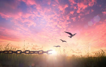 Freedom concept: Silhouette of bird flying and broken chains at autumn meadow sunrise background