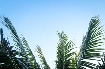 Palm sunday concept: Leaves frame of coconut branches with cloudy blue sky background Banque d'images