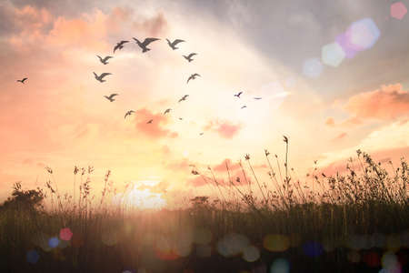 International human solidarity day concept: Silhouette birds flying in shape of heart on meadow autumn sunrise landscape background Banque d'images