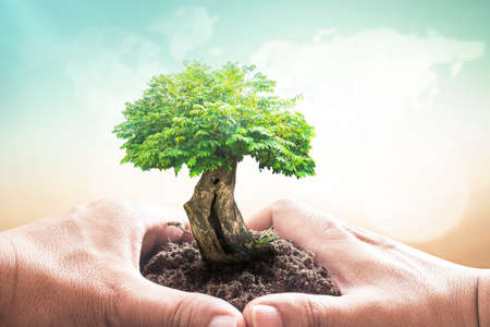 World charity day concept: Human handing big growth tree over blurred world map of clouds with green nature background