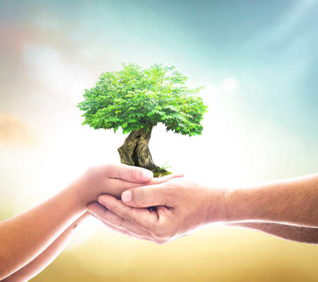 International human rights day concept: Two human hands holding growth tree on blurred nature background Banque d'images