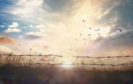 memorial day (HMD) concept: Silhouette of birds flying and barbed wire at sunset background