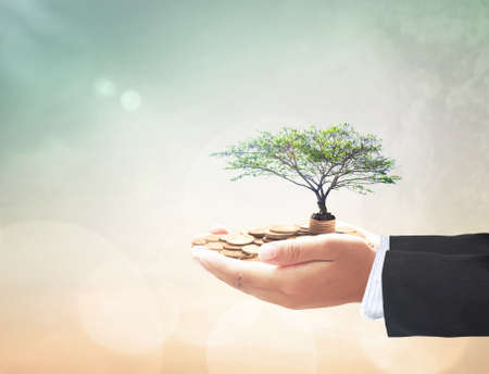 Invest fund concept: Businessman hand holding big tree and stack of coins over blurred nature background