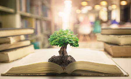 Teacher day concept: Big tree with soil on opening old book in blurred library background Banque d'images