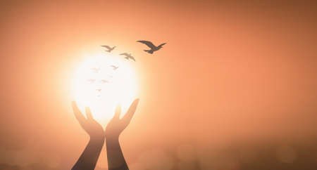Silhouette prayer hands with birds flying over sunset background Banque d'images
