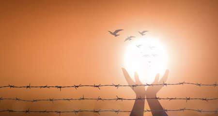 Freedom concept: Silhouette prayer praise God and birds flying with barbed wire