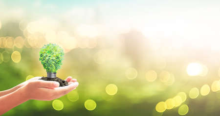 World environment day concept: Human hand holding light bulb of tree on blurred nature background