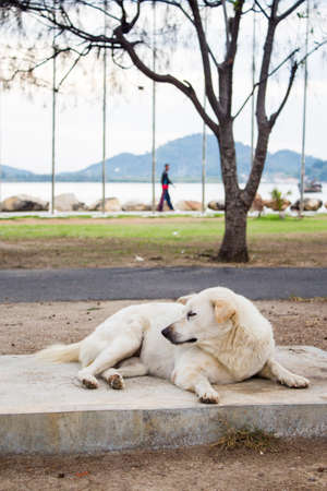 mujer mirando el horizonte: perro soledad yac�a en la playa