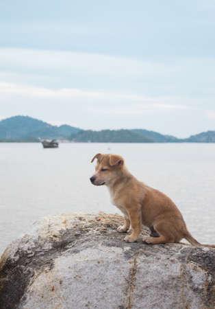 mujer mirando el horizonte: perro soledad sentarse en la playa Foto de archivo