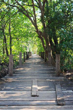 leading: wooden board walk path leading to destination