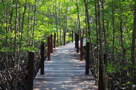walk board: wooden board walk path leading to destination