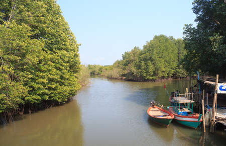 river side: mangrove forest in river side