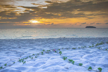water grass: morning clearly yellow warm sunset and green water grass on white sand beach