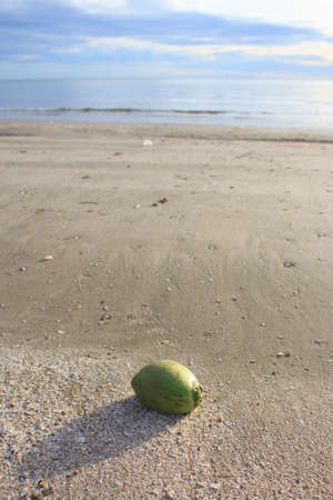clearly: coconut on sea sand beach with morning clearly yellow warm sunset reflect Stock Photo