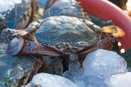 ice sea crab fresh in market