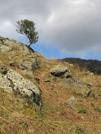 windswept: Windswept single tree
