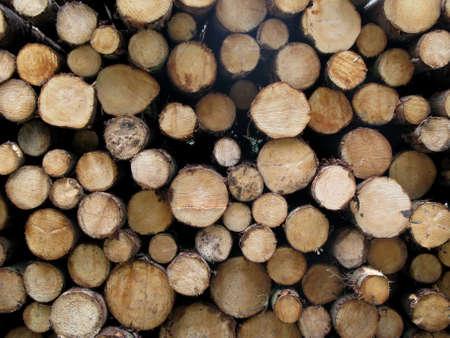 Troncos talados Foto de archivo - 4873134