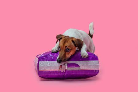 Dog jack russell terrier lies on a pack of dog food, studio shot on a pink background