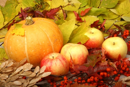 Pumpkin and apples photo