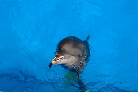 Happy dolphin smiling opened his mouth showing his teeth with his eyes open. Stock Photo