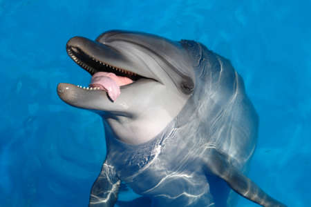 Beautiful Dolphin swimming in blue water