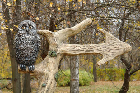 The owl sits on a tree. Owl sitting on a branch with a pointer. The arrow shows the direction of movement to the right. Park North Tushino. Moscow, Russia. October 2018.