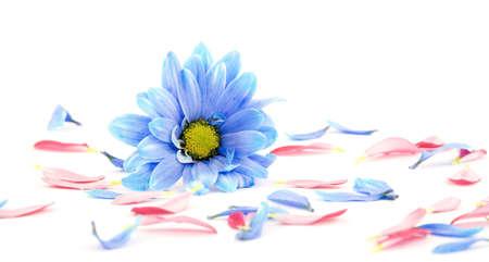 beautiful flowers studio isolated over white