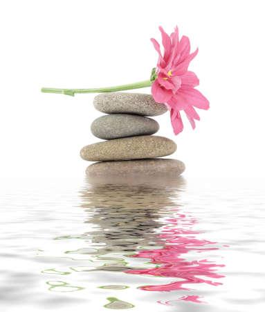 steine im wasser: therapeutische Zen  Spa Steine mit Blumen isoliert