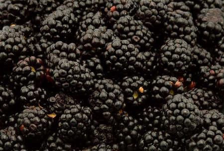 blackberries studio isolated over white