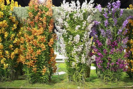 breda: Columns of variuos color dendrobium orchid flower ,indoor garden Stock Photo