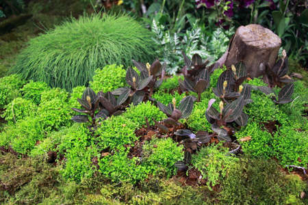 asia pacific: An indoor botanical garden with small bushes at The 12th Asia Pacific Orchid Conference 2016, Bangkok Editorial