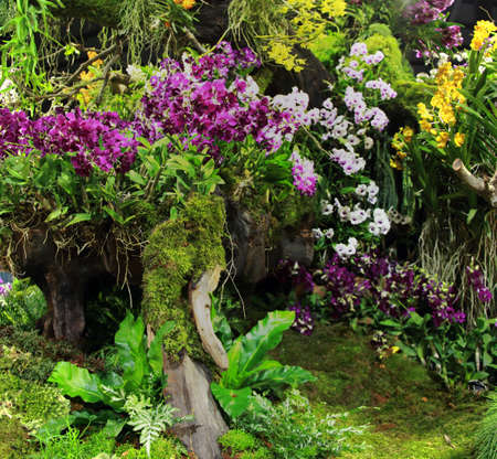 asia pacific: An indoor botanical garden with orchids at The 12th Asia Pacific Orchid Conference 2016, Bangkok