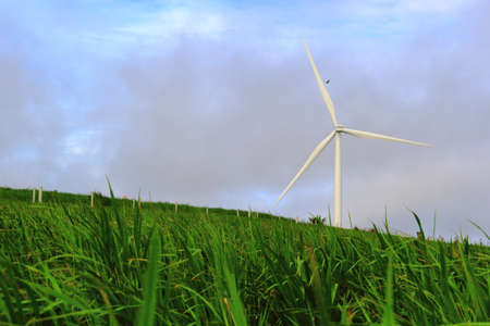 Wild Purple Rice Field and Windmills Clean Energy Farm at Khao Kho ,Petchaboon