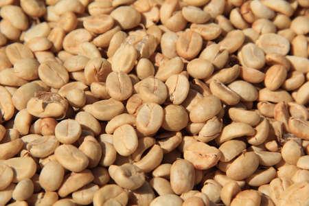 Close up of Raw coffee beans (plantation) Reklamní fotografie