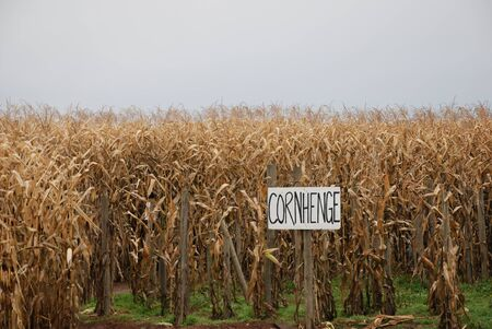Corn Maze Reklamní fotografie