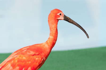 close up of a red crane beside water photo