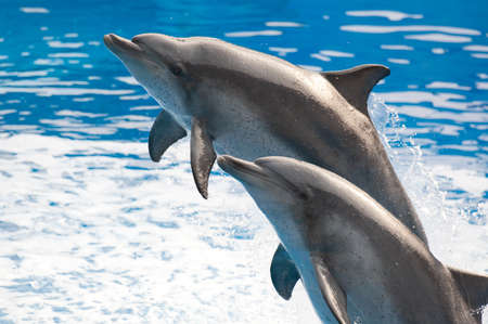 bottlenose: cute dolphin is jumping out of water Stock Photo
