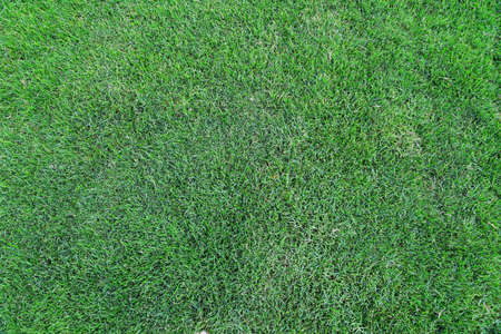 grassy field: Green grass background texture Stock Photo