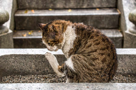 calico whiskers: tigerish cat scratching