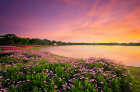 The lake in public park and flower garden zone in Bangkok city of Thailand. Stock Photo