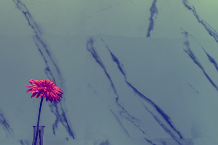 Pink flower on the marble wall background