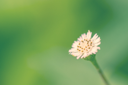Flower on green background on spring summer nature garden, Stock Photo