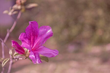 Pink flower on garden or plant flora Reklamní fotografie