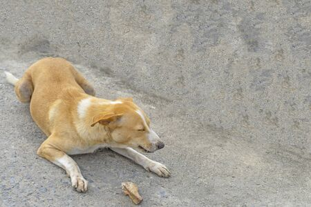 Stray dog eating on the ground or vagrant dog