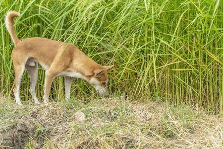 Dog walking In the forest playful landscape Reklamní fotografie