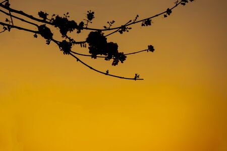 Twigs shoot silhouette natura landscape on evening