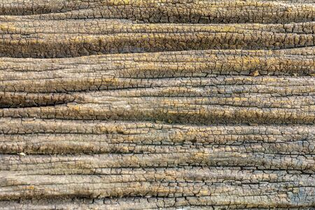 Old wooden texture background or abstract background, Pattern nature