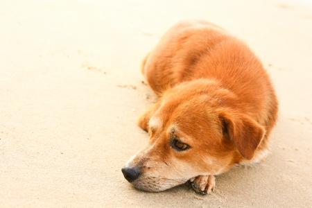 spiritless: Dog fur is pretty lonely sleeping alone