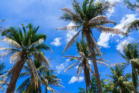 ���clear sky���: Coconut trees on the beach in the day clear sky